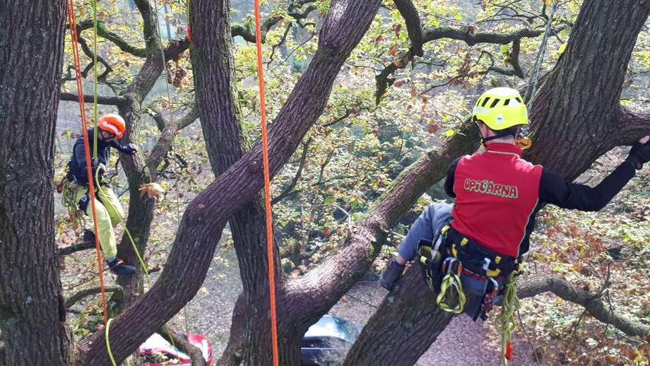 Arboristické služby Outdoor Naplno